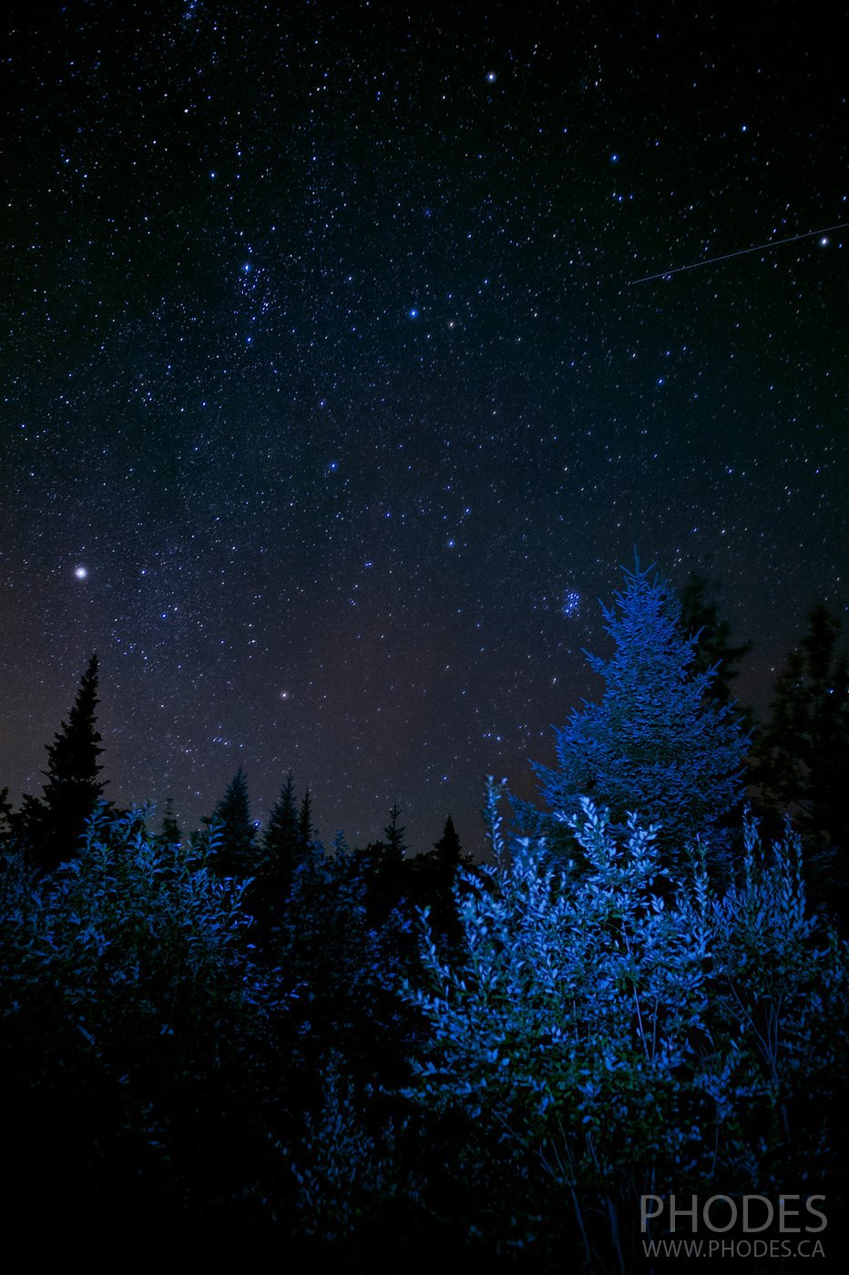 Stars over the trees in the park Mont-Megantic