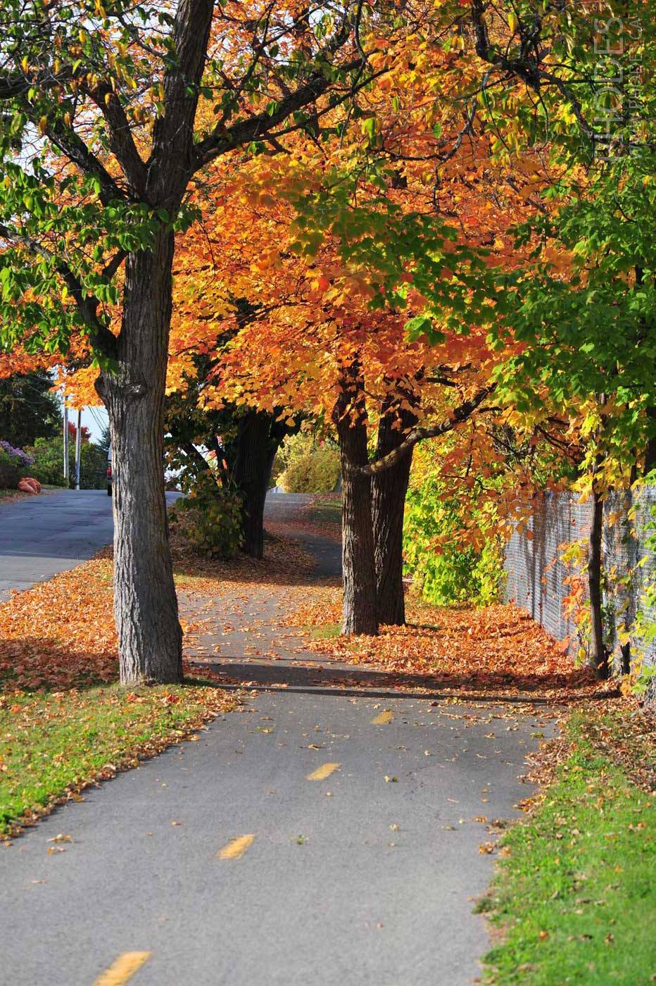 Bike path, Laval, Quebec